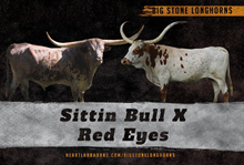Sittin Bull x Red Eyes